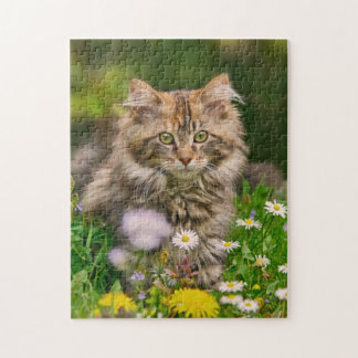 Cute Maine Coon Kitten Cat Flowers - Game Jigsaw Puzzles