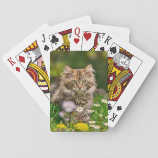Cute Maine Coon Kitten Cat in a Flower Meadow . Playing Cards