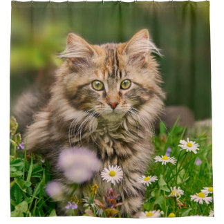 Cute Maine Coon Kitten Cat in a Flower Meadow Tub