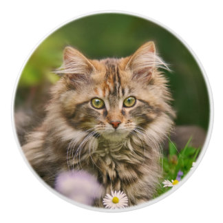 Cute Maine Coon Kitten Cat Pet Photo - Decorative Ceramic Knob