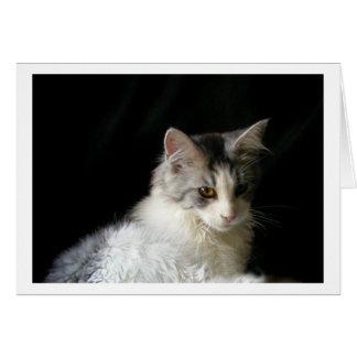 Cute Maine Coon kitten note card