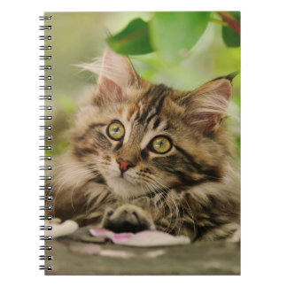 Cute Maine Coon kitten Notebooks