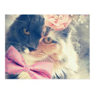 Cute Maine Coon Kitten Retro Style Postcard