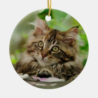 Cute Maine Coon kitten Round Ceramic Ornament