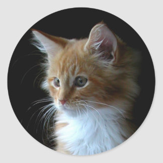 Cute Maine Coon kitten sticker