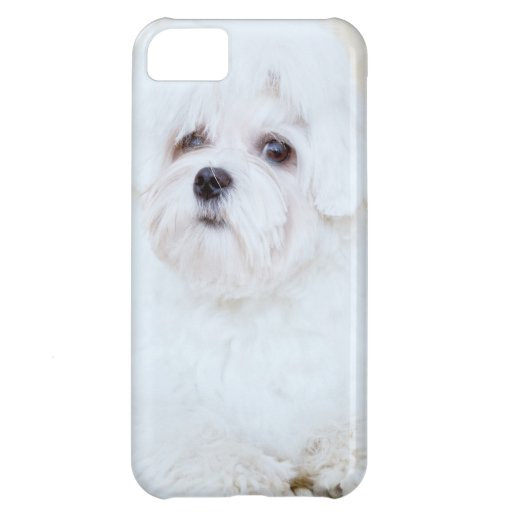 Cute Maltese Dog Cover For iPhone 5C