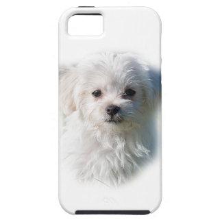 Cute Maltese Dog iPhone 5 Cases