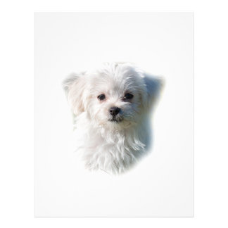 Cute Maltese Dog Letterhead