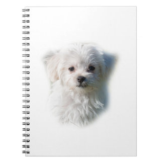 Cute Maltese Dog Notebooks