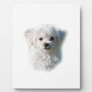 Cute Maltese Dog Plaque