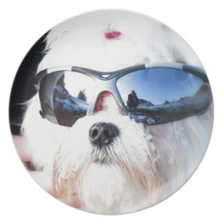 Cute Maltese Dog Plate