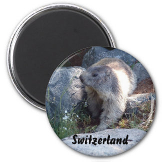 Cute marmot Switzerland Magnet
