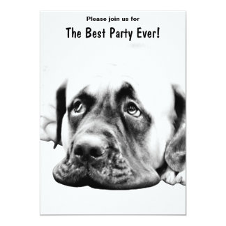 Cute Mastiff dog Card