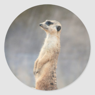 Cute Meerkat  Sticker