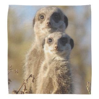 cute meerkats 1214 bandana