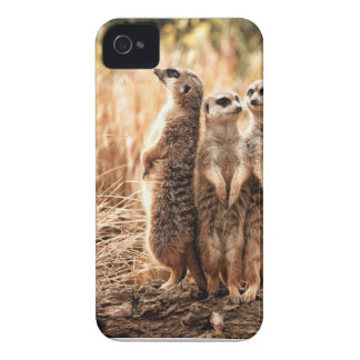 Cute Meerkats iPhone 4 Case