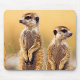 Cute Meerkats sitting up Mouse Pad