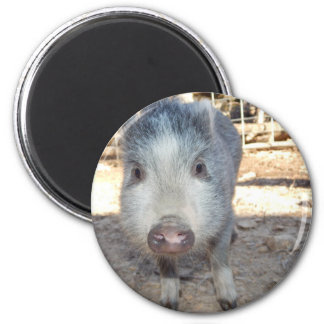 Cute Mini Pig 2 Inch Round Magnet