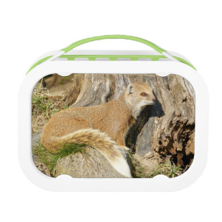 Cute Mongoose Animal Lunch Box