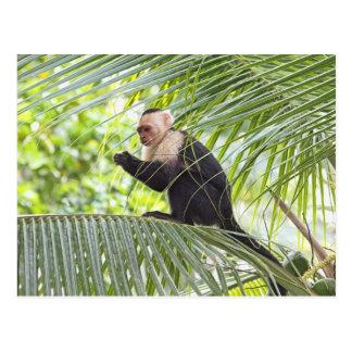 Cute Monkey on a Palm Tree Postcard