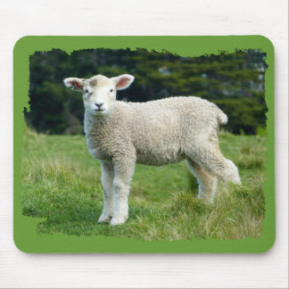 Cute Muddy Lamb Baby Sheep in Meadow Mouse Pad