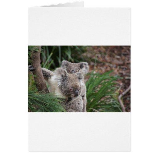 Cute Nature Jungle Tree Safari Koala Animals Bear Card