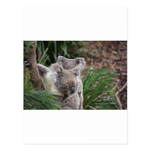 Cute Nature Jungle Tree Safari Koala Animals Bear Post Card