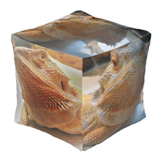 Cute Orange Bearded Dragon Pictures Large Pouf