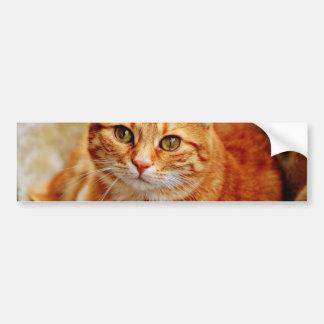 Cute Orange Cat Bumper Sticker
