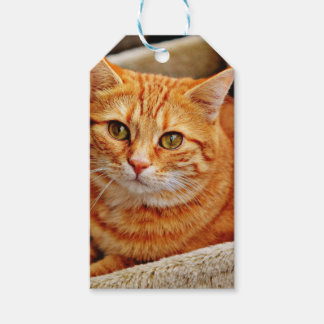 Cute Orange Cat Pack Of Gift Tags