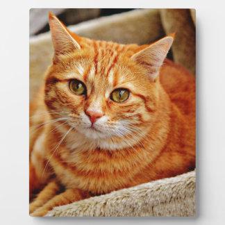 Cute Orange Cat Photo Plaques