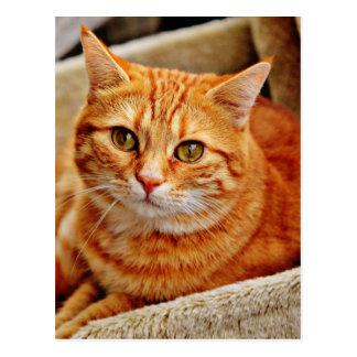 Cute Orange Cat Postcard
