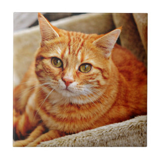 Cute Orange Cat Tile