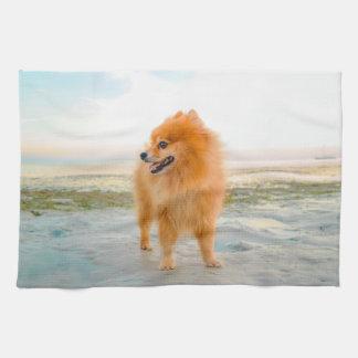 Cute Orange Pomeranian on Sandy Beach Kitchen Towel