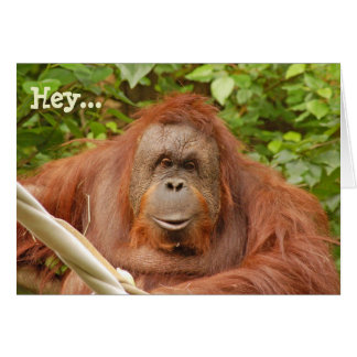 Cute orangutan birthday greeting card