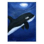 Cute orca whale post card