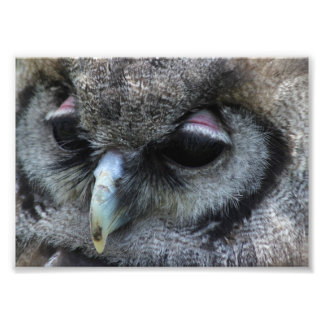 Cute Owl Photo Print