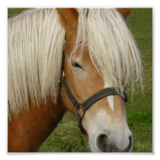 Cute Palomino Pony Poster