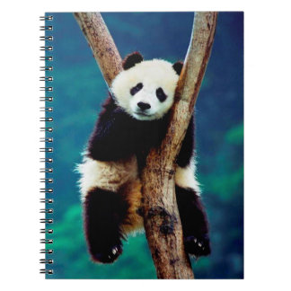 Cute Panda Bear Spiral Notebooks