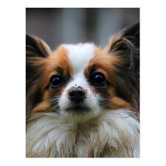 Cute papillon dog postcard