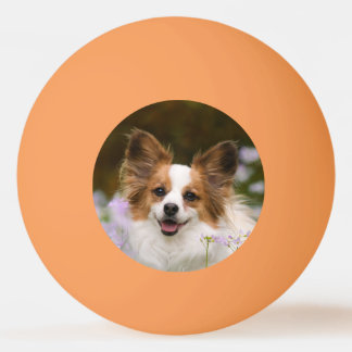 Cute Papillon Spaniel Head Photo for Dog Lovers Ping Pong Ball