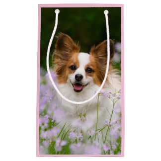 Cute Papillon Spaniel Head Photo for Dog Lovers _- Small Gift Bag