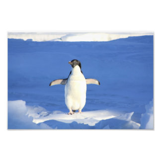 Cute Penguin Photo Art