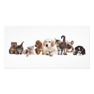 Cute Pet Panorama Photo Card
