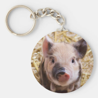 Cute Pic of a baby Pig Basic Round Button Keychain
