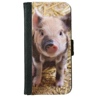 Cute Pig iPhone 6 Wallet Case