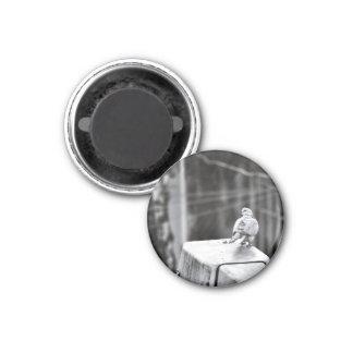 Cute Pigeon Magnet