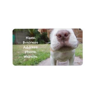 cute pit bull dog brown nose close