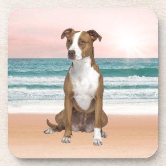 Cute Pitbull Dog Sitting on Beach with sunset Drink Coaster
