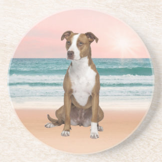 Cute Pitbull Dog Sitting on Beach with sunset Drink Coasters